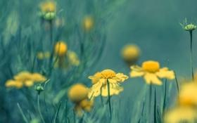 Обои природа, луг, поле, трава