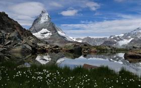 Картинка природа, горы, трава, озеро, цветы