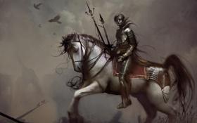 Обои всадница, доспехи, кираса, конь
