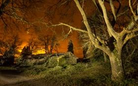Обои дорога, свет, деревья, ночь, огни, дом