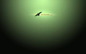 Обои надпись, птица, зелёный, обои, картинка, фон, изображение