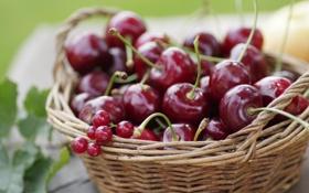 Картинка корзина, лето, вишня, смородина, фрукты, ягоды, черешня