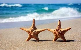 Картинка песок, море, пляж, морская звезда, summer, beach, sea