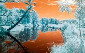 Обои цвета, деревья, река