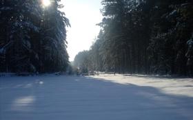 Обои лес, снег, солнце