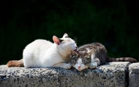 Обои кошки, природа, весна
