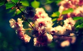 Обои листья, макро, цветы, ветки, природа, растения, лепестки