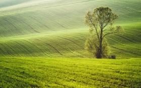 Обои деревья, природа, поля, весна, зеленые
