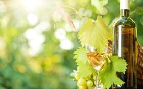 Обои вино, бокал, бутылка, виноград, солнечные лучи