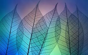 Обои листья, макро, свет, фон, прозрачные, прожилки