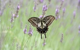 Картинка поле, цветы, бабочка, крылья, луг, насекомое, мотылек