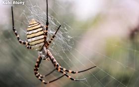 Обои макро, паутина, паук