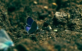 Обои песок, бабочка, голубая