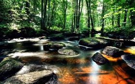 Картинка зелень, лес, деревья, ручей, камни, Швеция, Vastra Gotaland