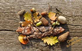 Обои листья, осень, желудь, шишка, кора, cheerful autumn days, веселые дни осени