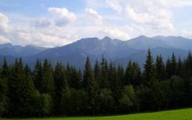 Обои Небо, Природа, Облака, Горы, Трава, Деревья, Лес