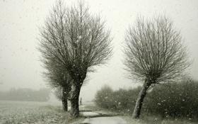 Картинка дорога, снег, деревья, пейзаж