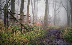 Картинка слякоть, осень, трава, грязь, кусты, деревья, природа