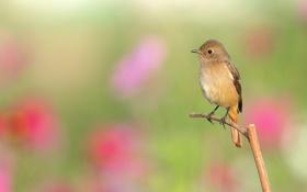 Картинка птица, фон, ветка