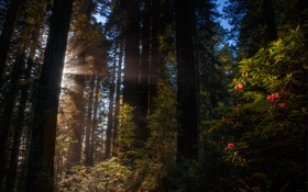 Обои лес, лето, деревья, полумрак, лучи солнца, кусты