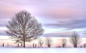 Картинка кусты, небо, зима, снег, розовое, дерево