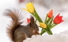 Обои природа, белка, цветы