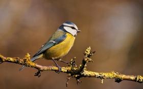 Картинка природа, птица, ветка, перья, клюв