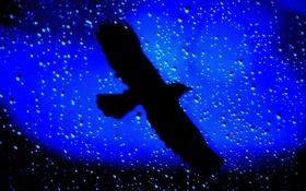 Обои капли, дождь, птица, размытость, силуэт, стеко