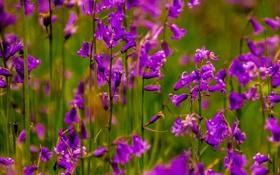 Обои поле, макро, цветы, сад, стебель, луг