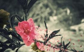 Картинка цветок, листья, природа, фото, фон, обои, обработка