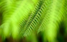 Картинка зелень, макро, растение, листочки