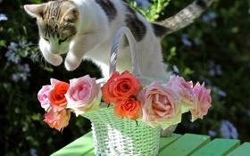 Обои кот, прыжок, розы, © Elena Di Guardo, корзина, кошка