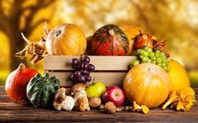 Обои осень, урожай, тыква, натюрморт, овощи, autumn, still life
