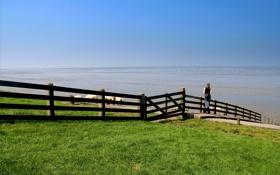 Обои животные, девушка, пейзаж, природа, забор, луг