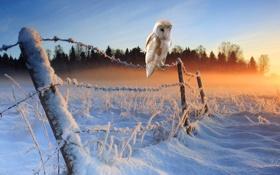 Картинка зима, снег, утро, ограждение, winter, snow, morning