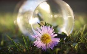 Обои цветок, природа, фото, обои, ваза, травка, картинка