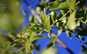 Обои лето, листья, макро