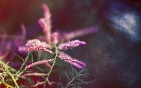 Обои осень, листья, палки, разноцветное
