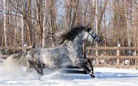 Обои зима, снег, конь