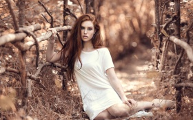 Картинка осень, боке, Wonderland, Alessandro Di Cicco