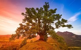 Обои пейзаж, горы, природа, дерево