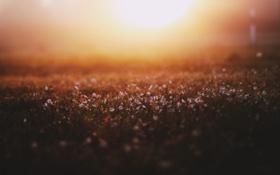 Картинка свет, цветы, туман, поляна, весна, утро