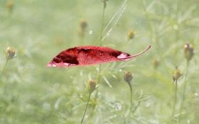Обои трава, капли, цветы, лист, роса, паутинка