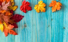 Обои листья, осень, дерево, клён