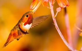 Обои цветок, птица, крылья, колибри