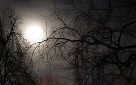 Обои небо, деревья, ветки, природа, туман, ветви, луна