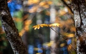 Обои Листья, осень, блики, кора, желтые, боке, стволы
