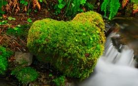 Картинка лес, река, ручей, камень, сердце, США, штат Вашингтон