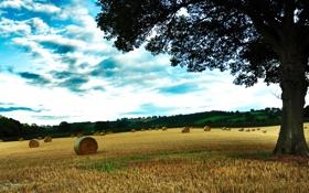 Обои пшеница, поле, осень, трава, деревья, фото, дерево