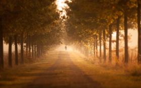 Обои дорога, осень, деревья, туман